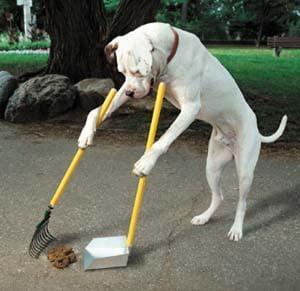 DOG(1)